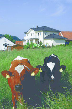 house-1469-platz-fuer-eine-familie-mit-fuenf-kindern-classic-169-von-dan-wood-6