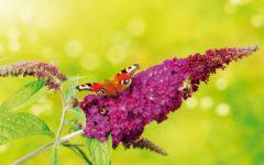 web_Garten_Naturgarten_AdobeStock_116193131_floydine