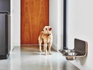 Erhöhter Hundenapf