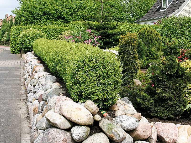 Natursteinmauer mit Buchsbaumhecke